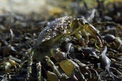 De krab en shells van het strand royalty-vrije stock afbeelding