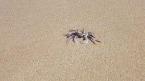 De krab op het zand reinigt stock video