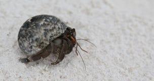 De krab van de kluizenaar. stock foto