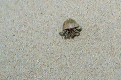 De krab van de kluizenaar Stock Fotografie