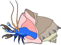 De krab van de kluizenaar stock illustratie