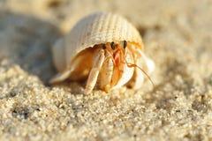 De Krab van de kluizenaar op een strand stock afbeeldingen
