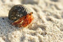 De Krab van de kluizenaar op een strand Stock Foto