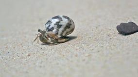 De Krab van de kluizenaar op een strand stock footage