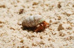De Krab van de kluizenaar op een strand royalty-vrije stock afbeeldingen