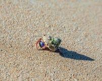 De krab van de kluizenaar op het strand Royalty-vrije Stock Afbeeldingen