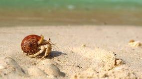 De krab van de kluizenaar op het strand Stock Foto's