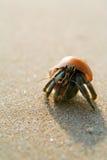 De Krab van de kluizenaar op het strand (paguro) Royalty-vrije Stock Afbeelding
