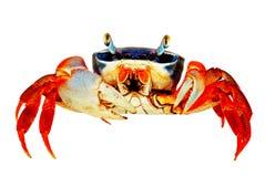 De Krab van de regenboog Royalty-vrije Stock Foto