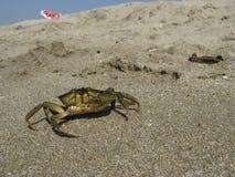De krab van de Zwarte Zee Royalty-vrije Stock Afbeeldingen