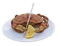 De krab van Dungeness Stock Foto