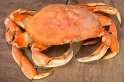 De krab van Dungeness klaar te koken Stock Foto's
