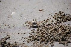 De krab van het spook op het strand Stock Foto