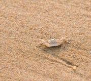 De Krab van het zand Stock Foto