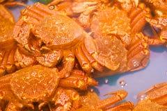 De krab van Hokkaido Stock Fotografie