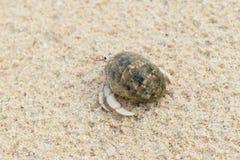 De krab van de kluizenaar op het strand Royalty-vrije Stock Foto's