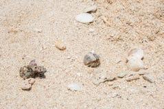 De krab van de kluizenaar op zandig strand Royalty-vrije Stock Fotografie