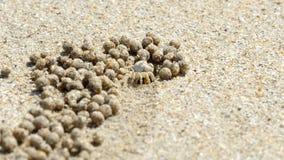 De krab van de zandwasfles, close-up stock video