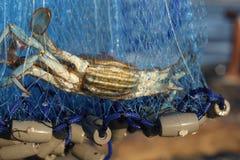 De krab vangt Stock Afbeelding