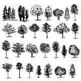 De krabbelschets van de bomen grafische hand getrokken vectorgravure royalty-vrije illustratie