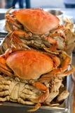 De krabben van Dungeness Stock Foto's