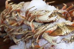 De Krabben van Dungeness royalty-vrije stock foto's