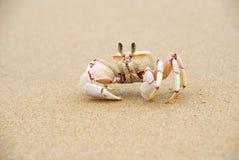 De Krabben van het spook stock fotografie