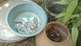 De krabben, vissen, vissen, kleipot, vingen krab, seizoen, stock video