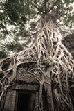 De Kracht van de aard bij Ta-Prom Kasteel, Angor royalty-vrije stock afbeelding