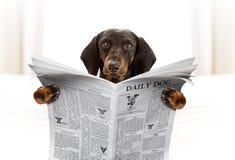 De krant van de hondlezing stock foto's
