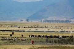 De Krater van Ngorongoro Royalty-vrije Stock Afbeeldingen