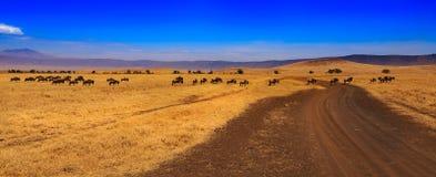 De krater van Ngorongoro in Tanzania Stock Afbeelding