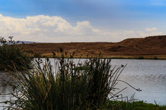 De krater van Ngorongoro in Tanzania Royalty-vrije Stock Foto's