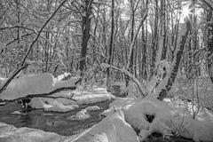 De kreek in de winterbos in Kleine Karpatische heuvels - Slowakije Stock Foto's