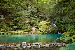De kreek komt in een kleine meertrog de kleine waterval met partij van bomen en verschillend soort installaties met gebladerte stock afbeelding