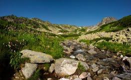 De kreek van bergen in de zomerdag Stock Foto's