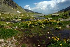 De kreek van de berg op plateau Stock Afbeeldingen