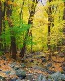 De kreek van de herfst Stock Afbeeldingen