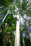 De Kreek van Eli, Faser Eiland, Australië stock foto's