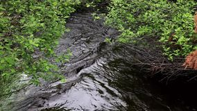 De Kreek van het bassindepot in Algonquin Park 2 stock footage