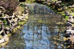 In de kreek is weerspiegelde bomen en blauwe hemel Royalty-vrije Stock Afbeeldingen