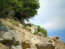 In de Krimbergen Stock Fotografie