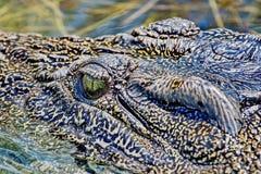 De krokodil is grote aquatische reptielen die door de keerkringen in Afrika, Azië, Amerika en Australië leven royalty-vrije stock foto's