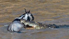De krokodil houdt in de tanden van de jonge wildernis Royalty-vrije Stock Afbeeldingen