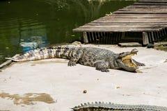 De krokodil open mond in Sam Pran Fram, Thailand Royalty-vrije Stock Afbeeldingen
