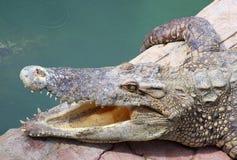 De krokodil openend het onderstel voor versie hij Royalty-vrije Stock Fotografie