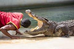 De krokodil toont Stock Foto's