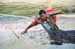 De krokodil toont royalty-vrije stock foto