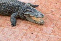 De krokodil toont stock fotografie