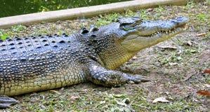 De Krokodil van het zoutwater, Australië stock foto's